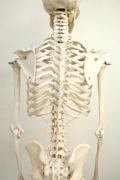 なぜ正しい姿勢が必要か?|骨盤矯正 接骨院 大府市